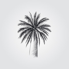 Hand Drawn Palm tree Sketch Symbol isolated on white background. Vector tropical elements art highly detailed In Sketch Style. Vintage vector illustration.