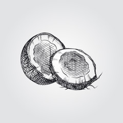 Hand Drawn Coconut Sketch Symbol isolated on white background. Vector tropical food elements In Sketch Style. Vintage vector illustration.