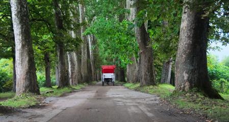 Horse cart in the Big Alley (Velika aleja) in Ilidža
