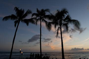 Palmen im Sonnenuntergang am Strand