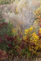 Autumn colorful tree landscape