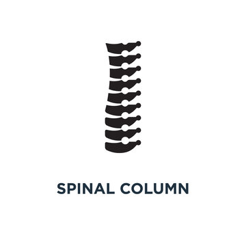 Spinal column icon. Simple element illustration. Spinal column c