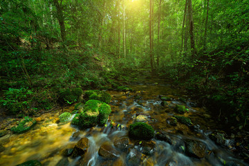 Beautiful stream in green forest