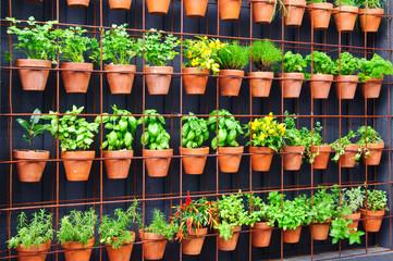 Vertical herb garden in individual terracotta pots