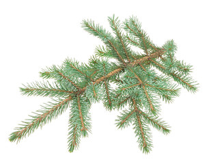 Fir branches on white