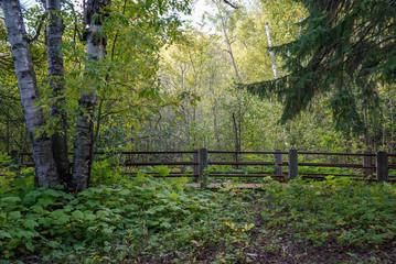 Deep Woods at Gooseberry Falls in Minnesota