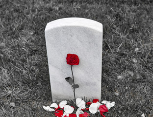 A Blank Headstone with a Rose and rose petals