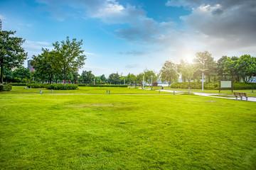 Urban park grassland forest..