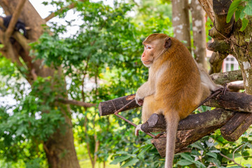 monkey on tree in an open zoo of Thailand