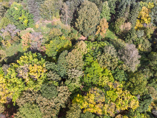 aerial view over trees in autumn forest with vibrant colors leaves