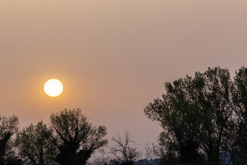 Sunset with sand suspended in the atmosphere, coluring the sky red, over some trees silhouettes