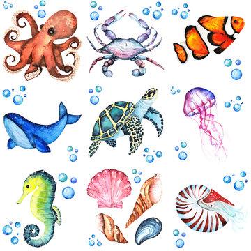Watercolor illustration set of many differentent sea animasls