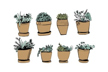 Plants illustrations. Hand drawn object