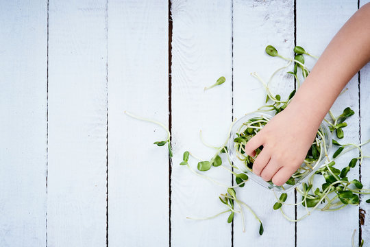 hand of a little girl reaches for the green sprouts of a sunflower from a white wooden table