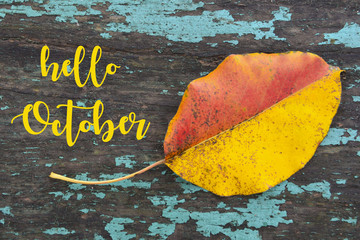 Hello October.Colorful aspen tree leaf on blue colored old wooden texture.Fall season concept.Selective focus.
