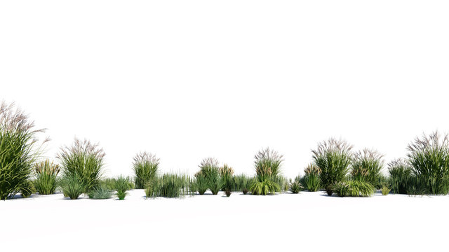 3d rendering of a group of plants raw for architectrural background use isolated on white