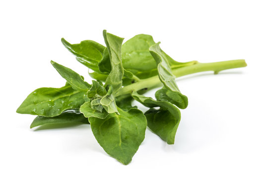 Organic New Zealand spinach isolated on white background