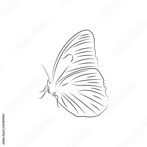 Butterfly Logo Icon Design Template Vector