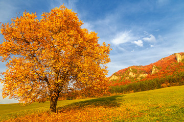 Landscape with a tree in autumn color, National Nature Reserve Sulov Rocks, Slovakia, Europe.