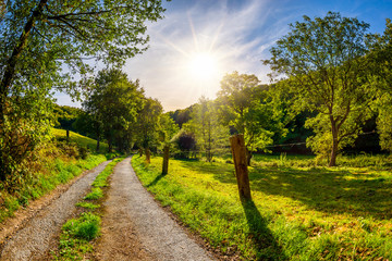 Wall Mural - Summer Landscape with bright sun and road through green meadows with trees