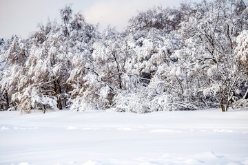 Picture of picturesque winter landscape with blue sky