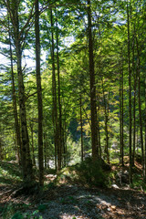 Forest in Adamello Brenta National Park, South Tyrol / Italy