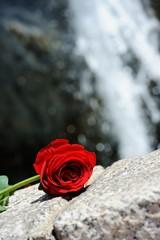 Waterfall Rose