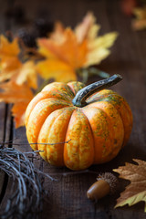 Thanksgiving or autumn concept - beautiful orange pumkin or squash on dark rustic wooden background