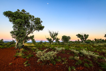 Scenic view over outback gorge with red rock and green trees