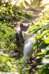 Two funny kittens in the grass on blurred background at morning. Beautiful bokeh
