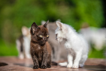 Many small kittens  on blurred green background at morning