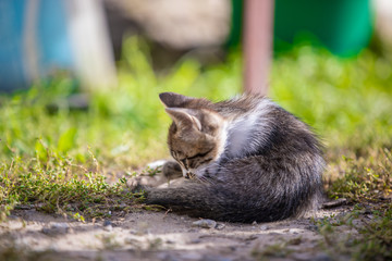 Little kitten lies in the backyard in the morning. Beautiful bokeh