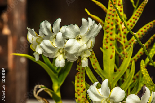 Fleur Blanche Tropicale Stock Photo And Royalty Free Images On