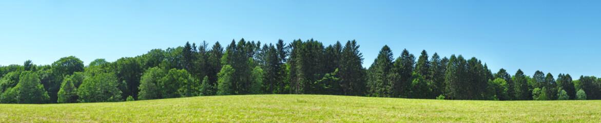 Fotoväggar - Waldrand im Sommer - Panorama