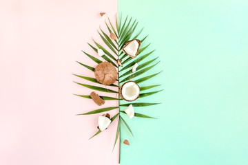 Tropical green palm leaf and cracked coconut on colorful background. Nature concept. flat lay, top view