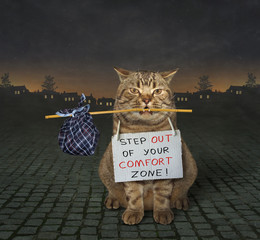 "There is a cat with a sign around his neck. It says "" Step out of your comfort zone ! ""."
