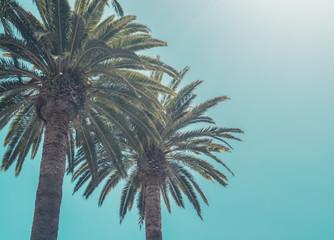 two palms on blue sky