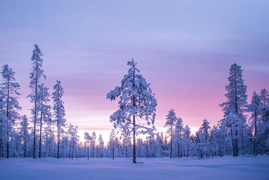 Snow covered winter landscape at sunrise, Lapland, Pallas-Yllastunturi National Park, Lapland, Finland