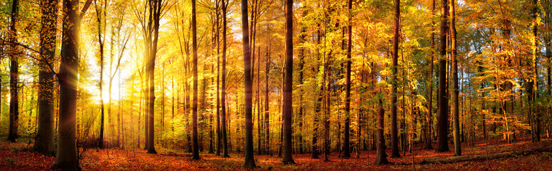 Wald Panorama mit Sonne im Herbst, stimmungsvolles Licht
