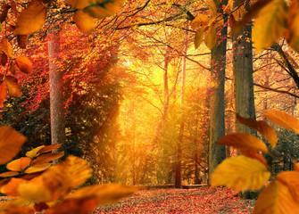 Wall Mural - Herbst im Wald, Szene mit stimmungsvollem Licht