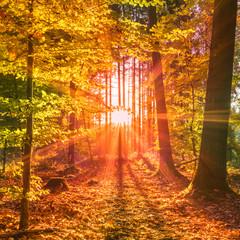 Sonnendurchfluteter Wald im Herbst