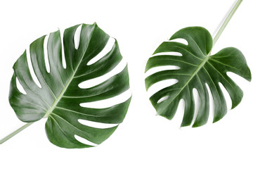Tropical palm leaves Monstera on white background. Flat lay, top view