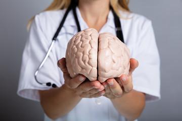 Doctor Holding Human Brain Model Wall mural