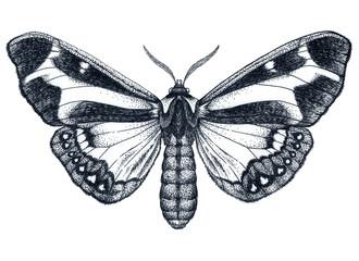 Beautiful Butterfly tattoo. Dotwork tattoo. Dysschema howardi. Traditional black dot style ink.