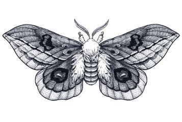 Hand drawn butterfly tattoo. Dotwork tattoo. Beautiful moth. Automeris Randa. Mystical symbol of freedom, beauty, life,
