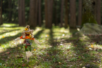 Toy Scare Crow Low to the Ground in a Forest