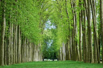 Spring in the gardens of the Palace of Versailles, Paris