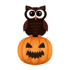 happy halloween owl with pumpkin