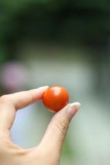 手持ちトマト