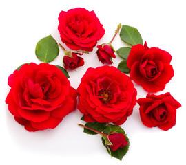 Red beautiful roses.